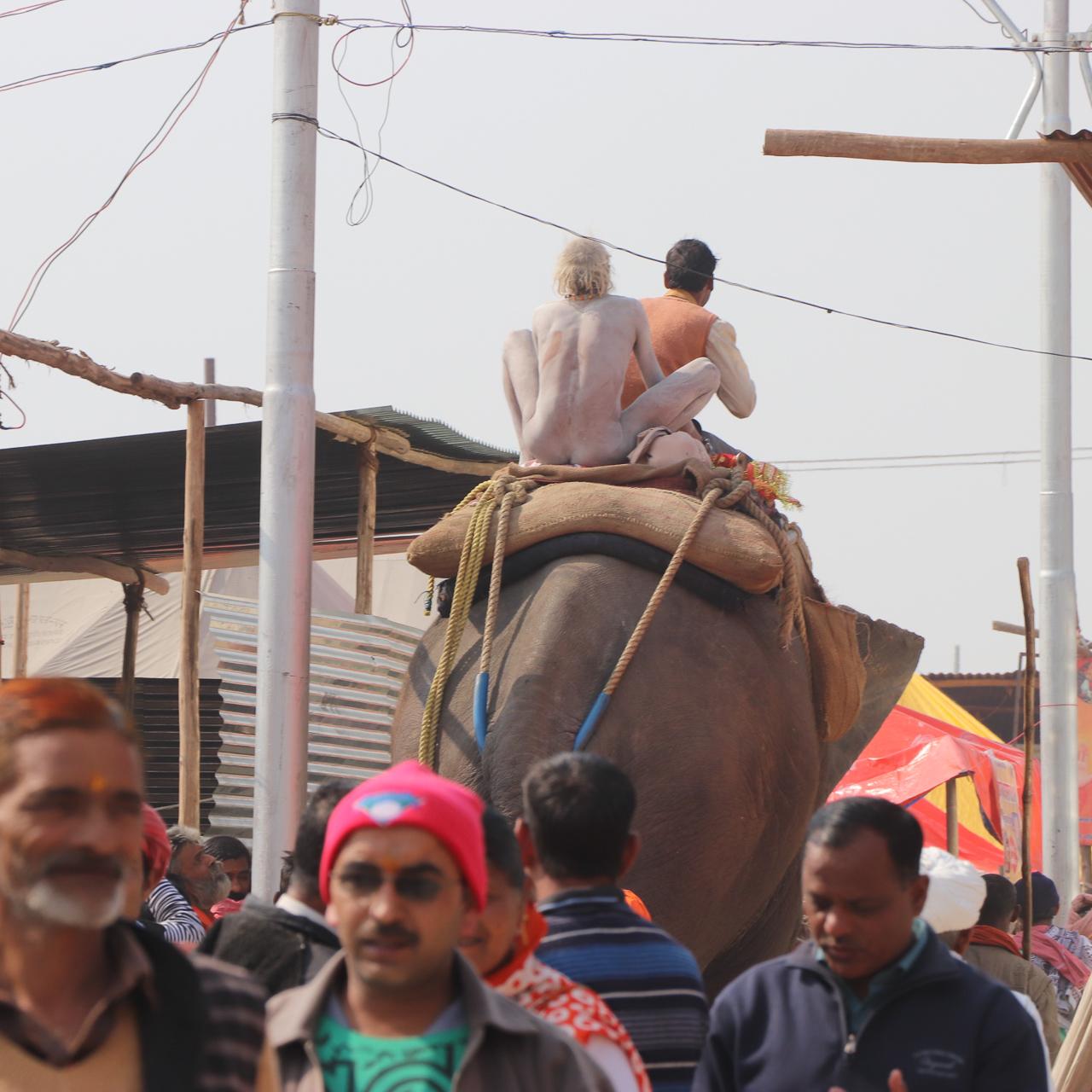 インドのお祭 クンブメーラ 象に乗る裸のサドゥ naga sadhu elephant