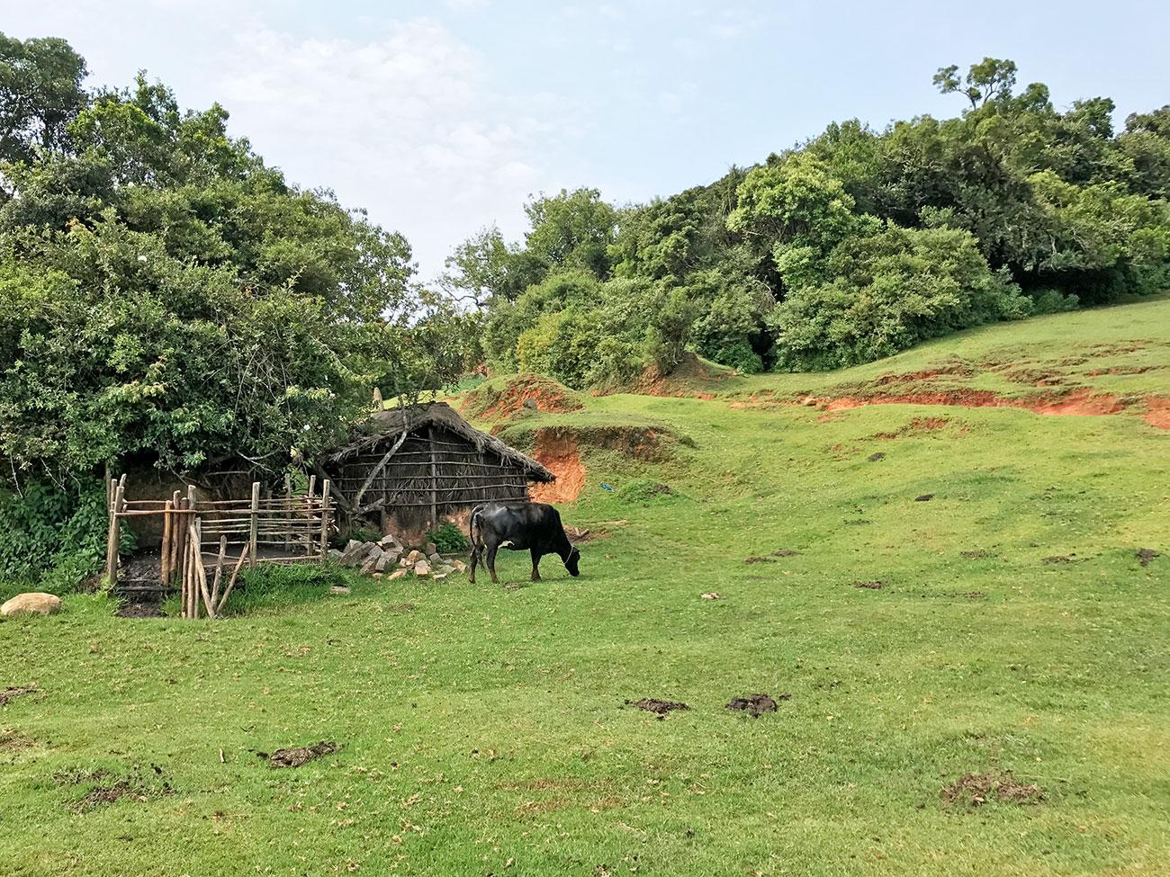 インド・ニルギリ地区に住む少数民族トダ
