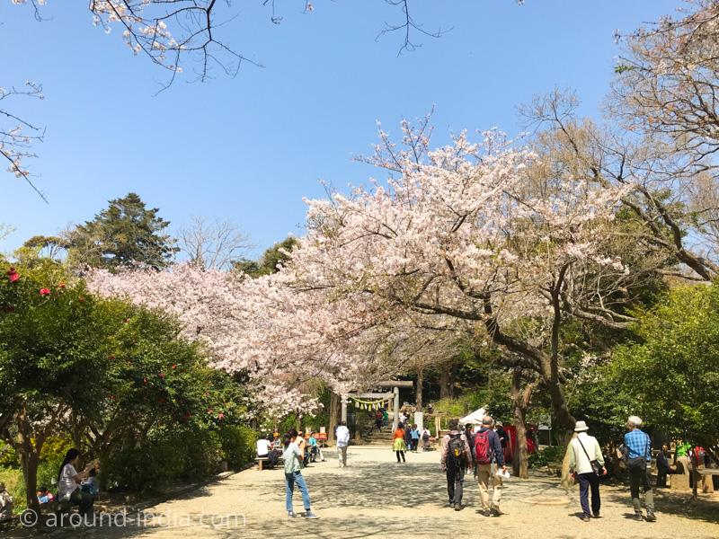鎌倉 葛原岡神社の桜