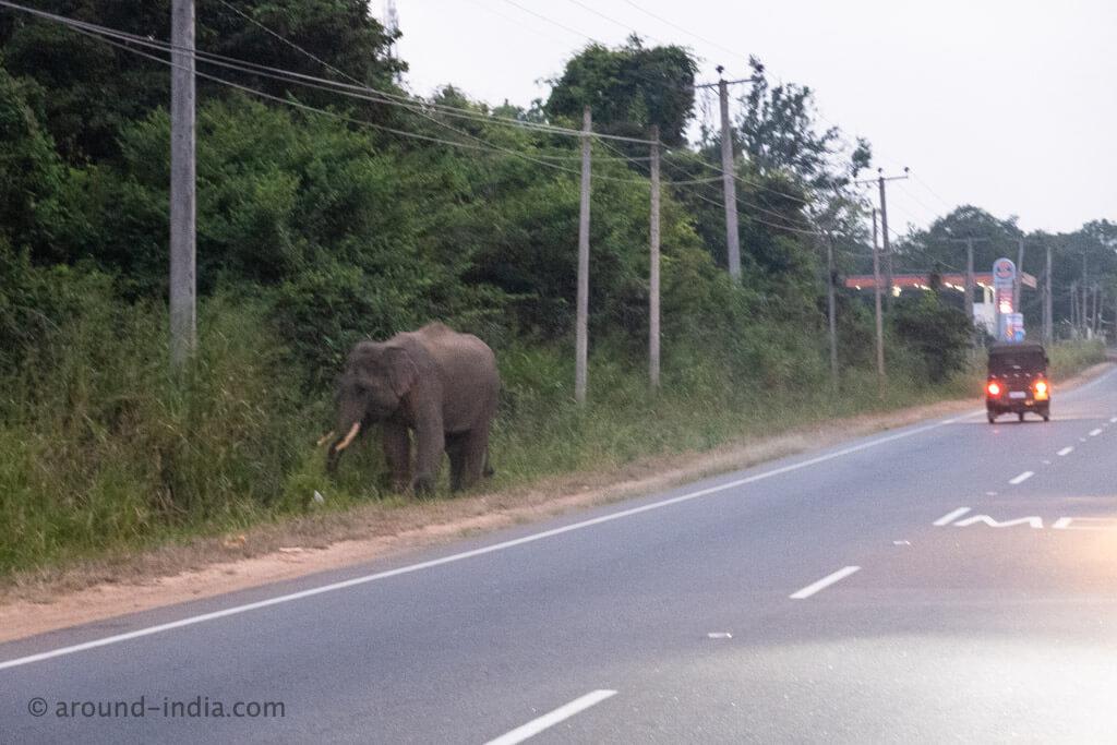 ヘリタンスカンダラマ 野生の象