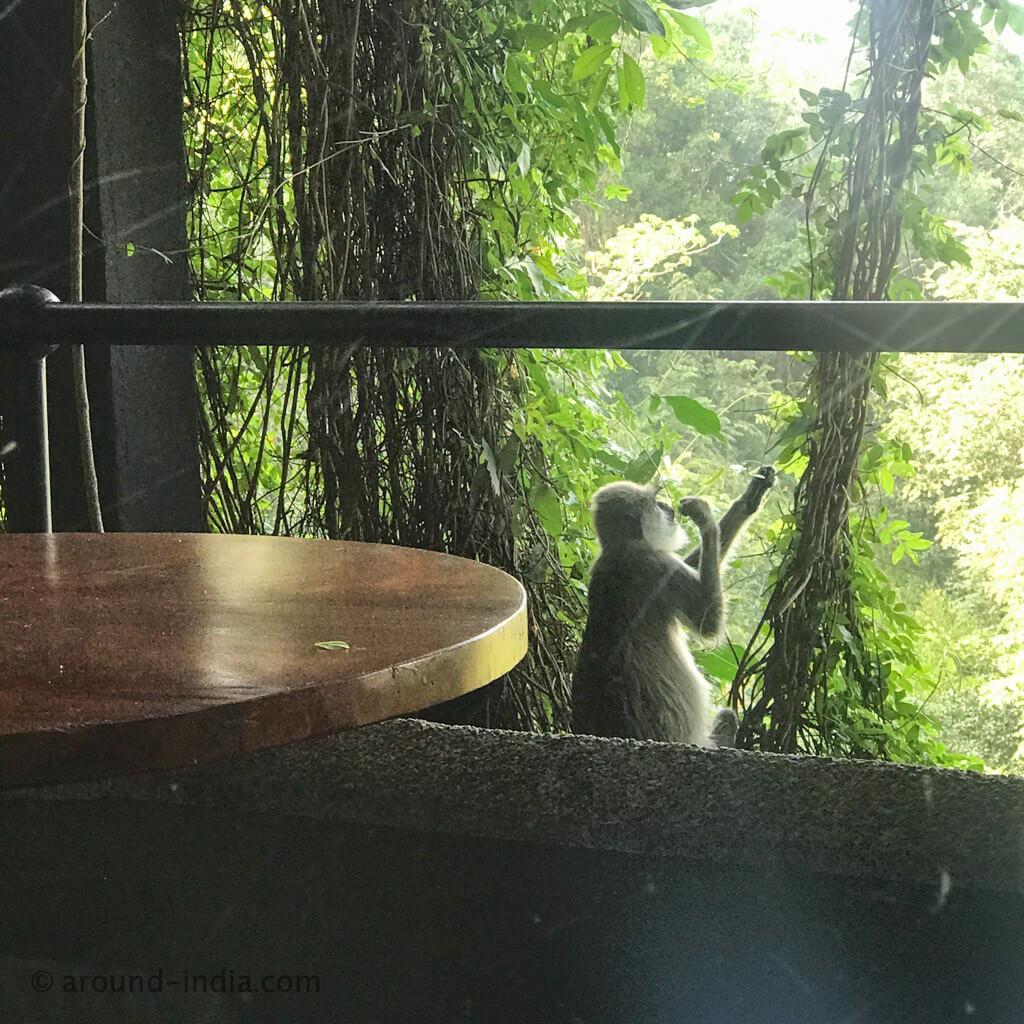 ヘリタンスカンダラマ 猿
