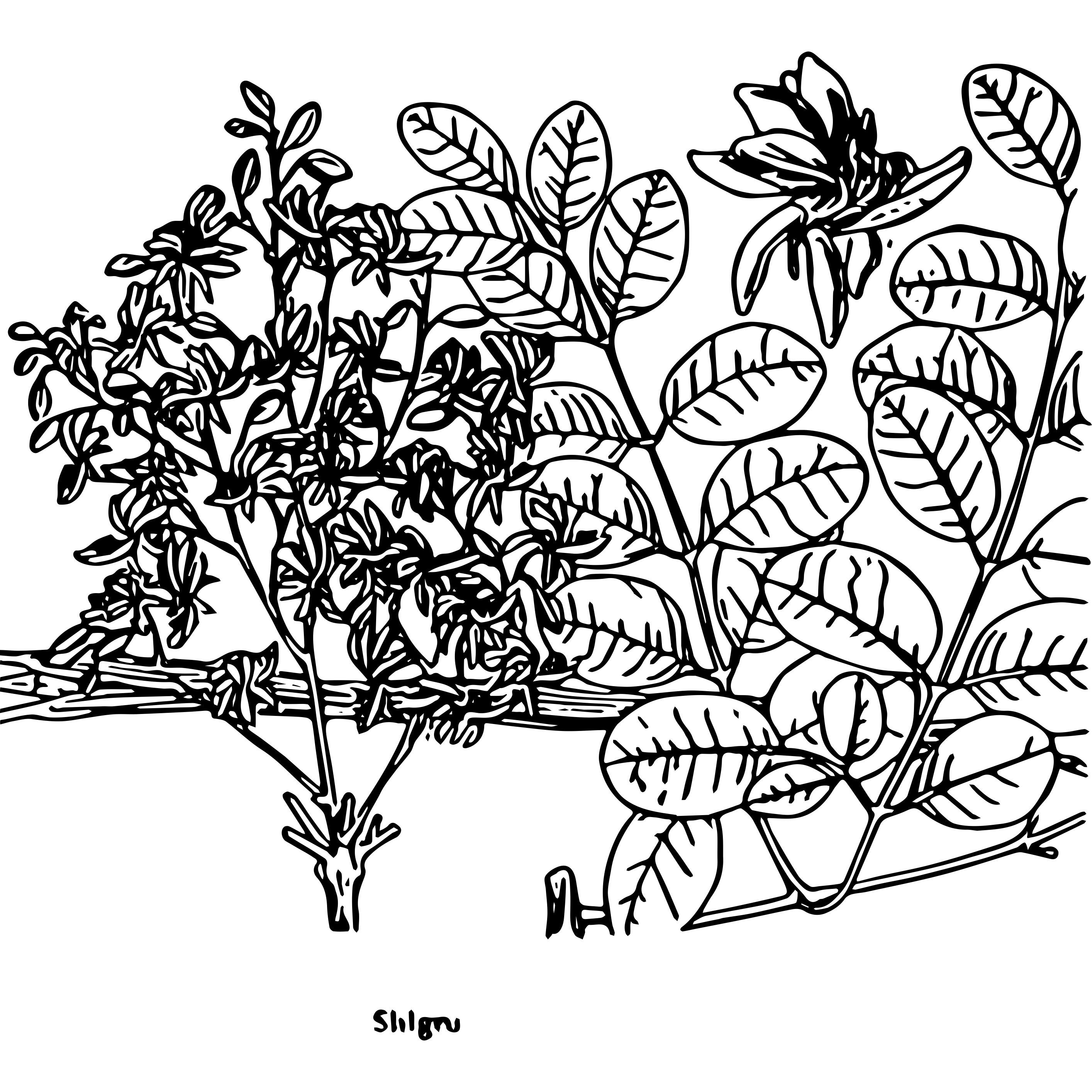 Speaking of Ayurvdic Herbal Cures by Dr. T.L.Dvaraj