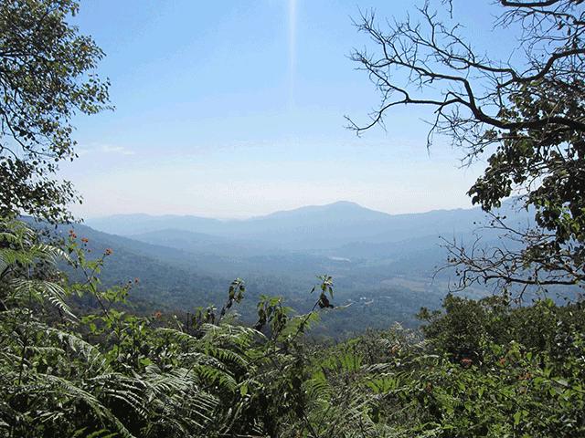 ハチミツの採れたケララの山