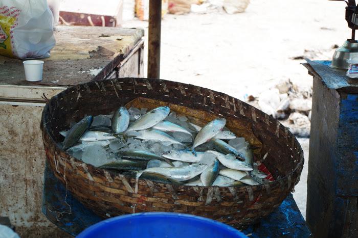 ケララ州カヌールの町中フィッシュマーケット、かごに入った魚