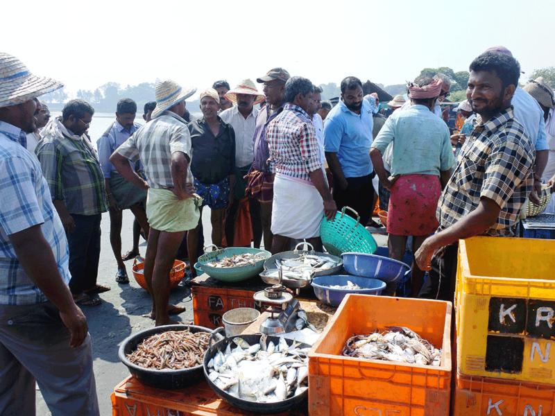 ケララ州カヌールの海辺の青空フィッシュマーケット、魚を買う人々