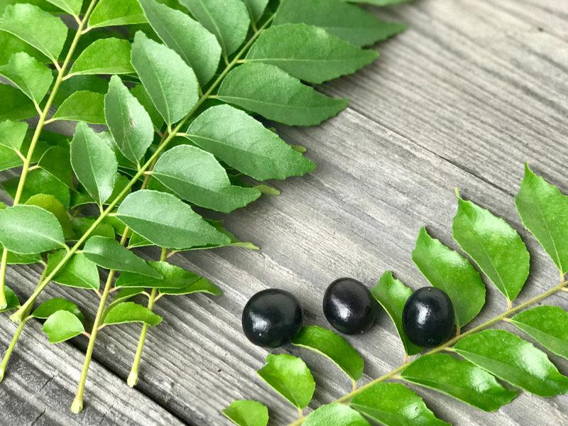 カレーリーフの葉と真っ黒に熟した実