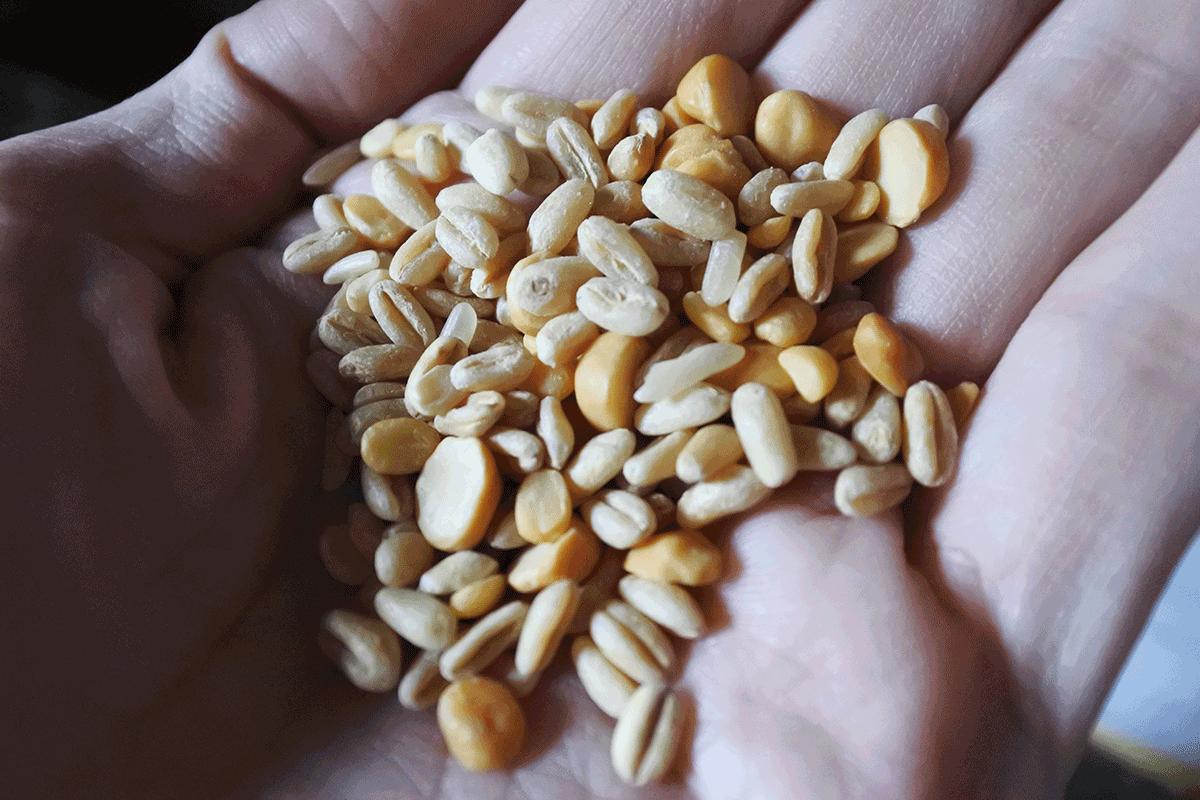 麦、豆、米のミックス
