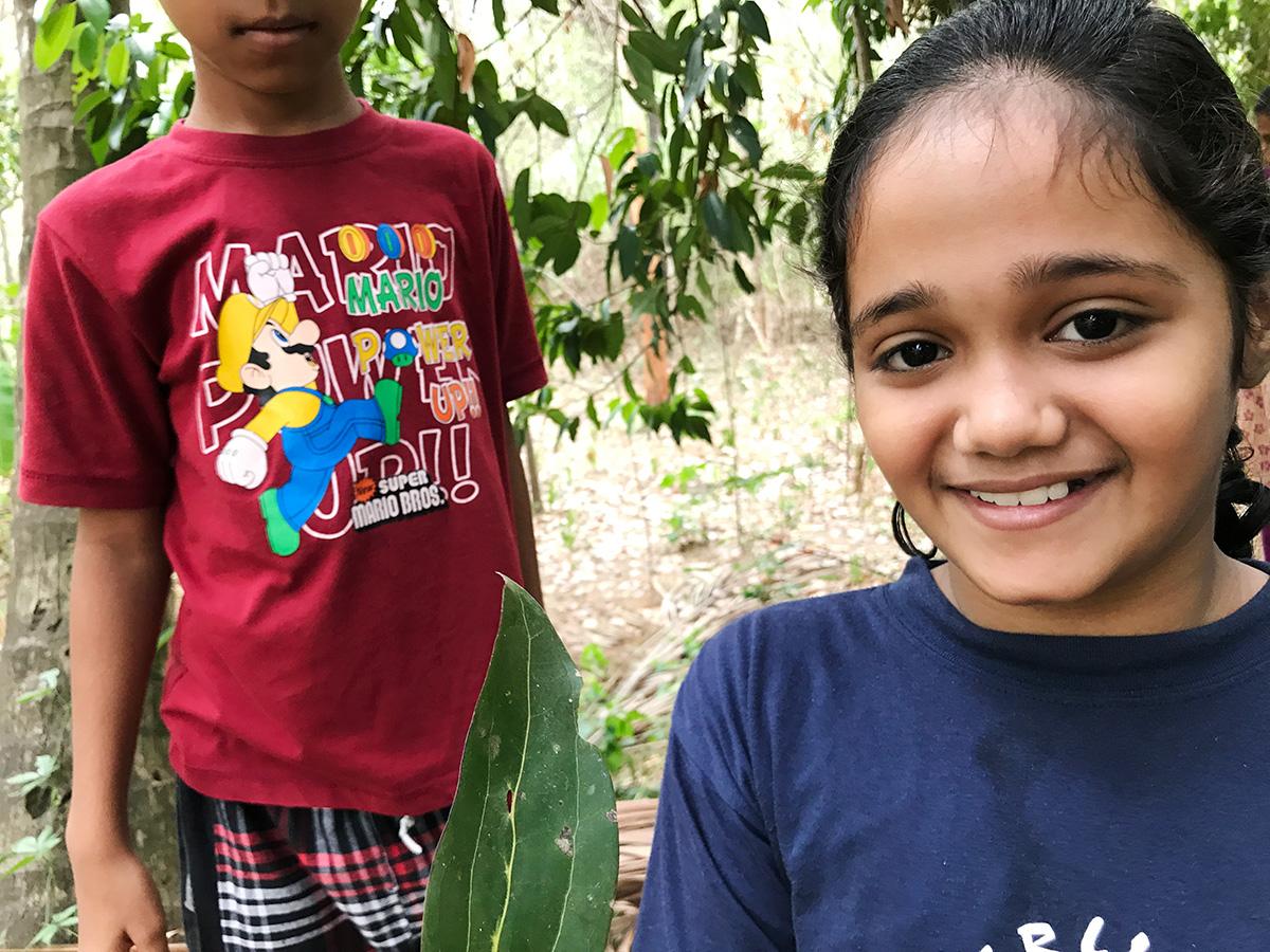 ビリヤニの木、シナモンの葉っぱ