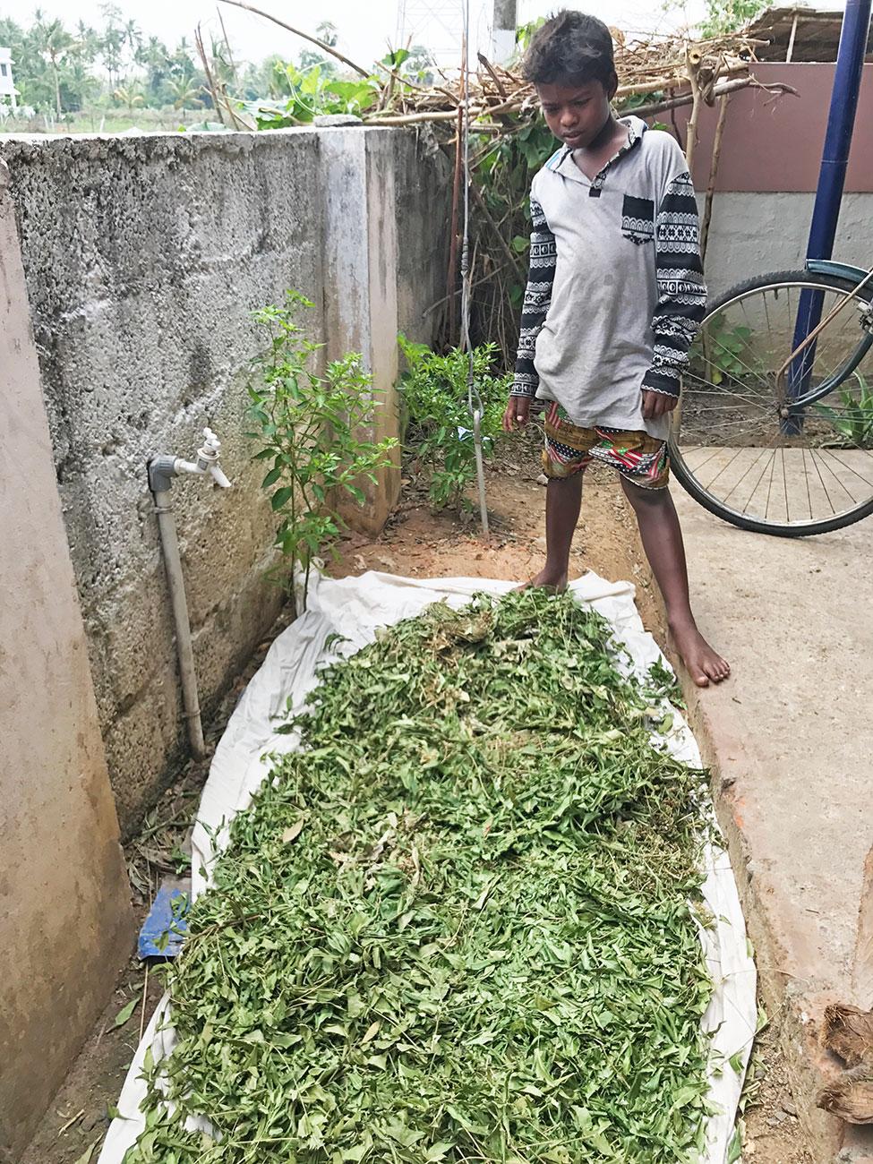 ケララ、Attappati部族のお薬の原料