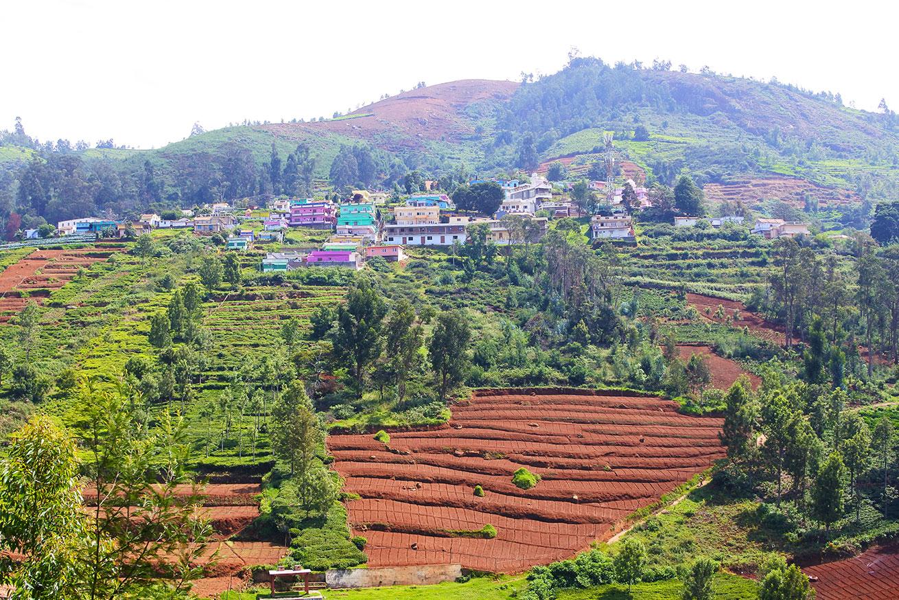 ニルギリの畑と家の風景