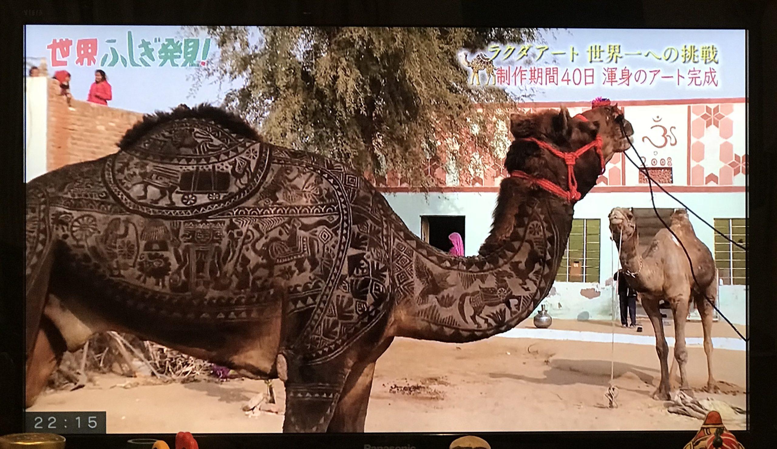 世界ふしぎ発見、武市さんがアートを施した後のラクダ