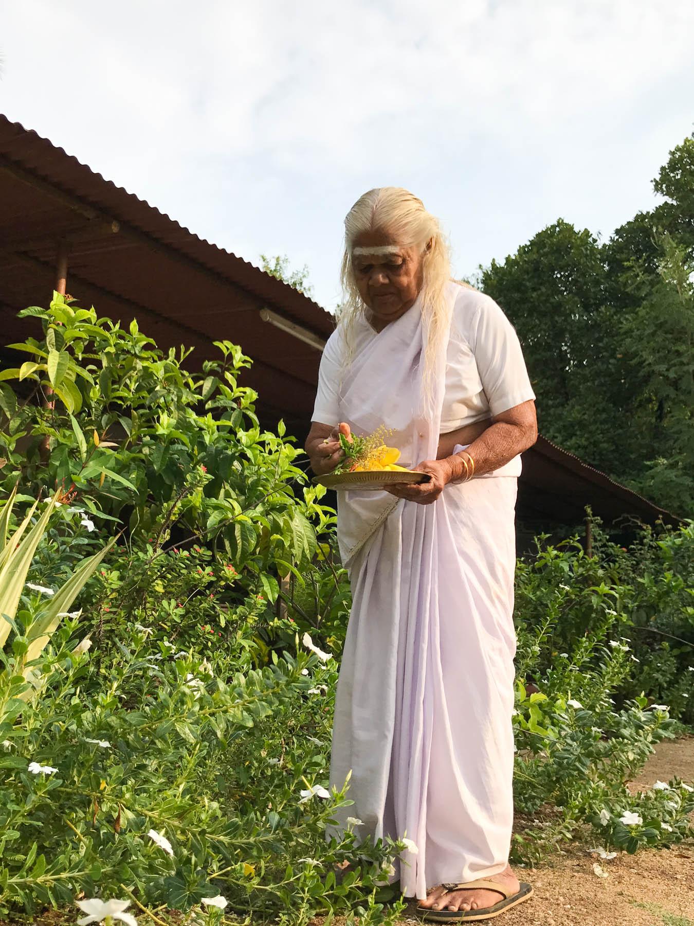 ケララの村のお宅で、トゥルシーなどを摘むおばあさん