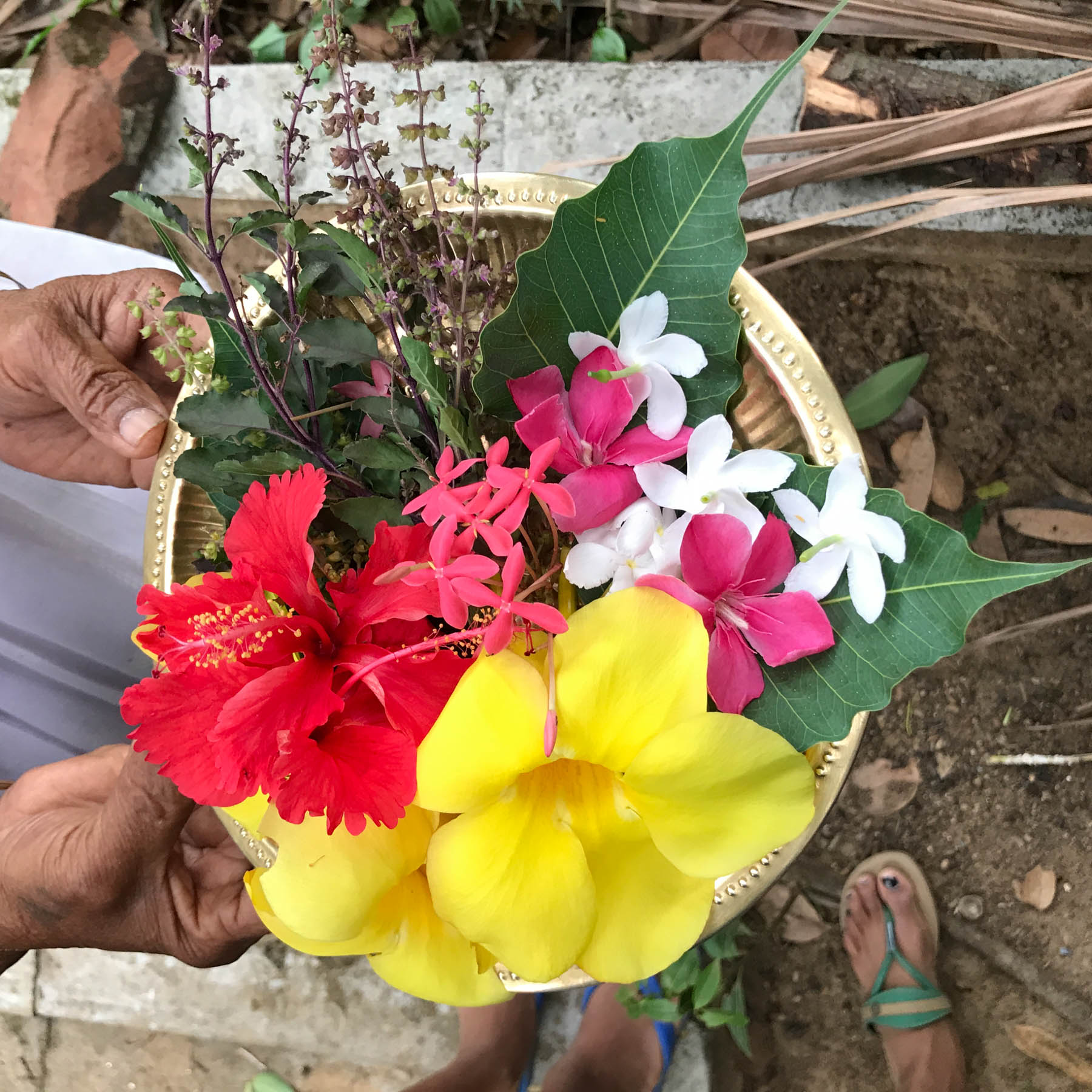 ケララの村のお宅で、トゥルシーなどの植物を摘んで。まるでフラワーアレンジメント!