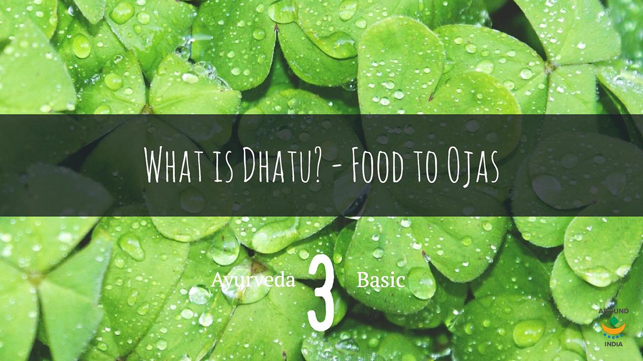 アーユルヴェーダの基本:7つのダートゥと食べ物が体になる流れ